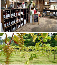 Averill House Winery Tour and Tasting Event